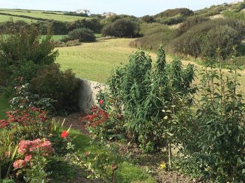 Countryside walks near Hillside Cottage Padstow